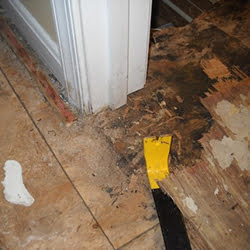 Wet Rot Repair Specialists