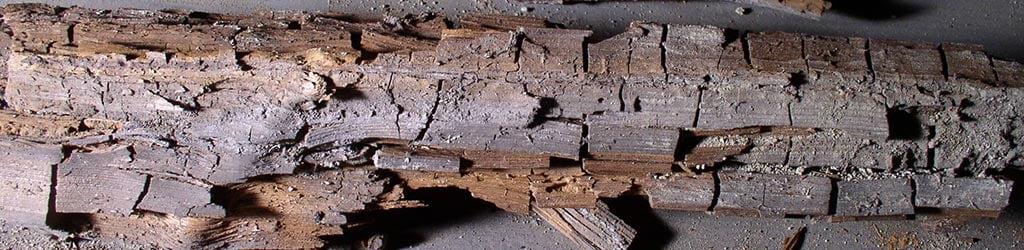 Hamptons Dry Rot Repairs Dundee Header